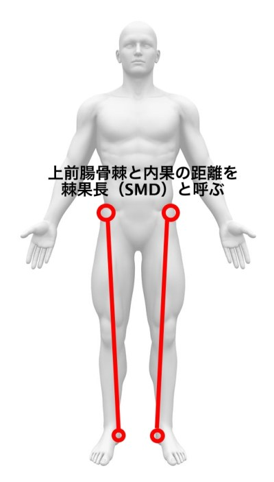 上前腸骨棘 棘果長 SMD