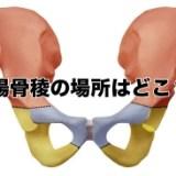 腸骨稜の位置 図