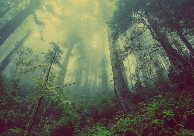 70000 drzew do rozdania
