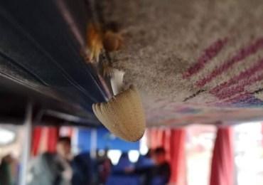 Ten grzyb rośnie w szkolnym autobusie!