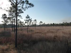 wetland mitigation bank instrument