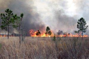 Prairie mitigation prescribed burn
