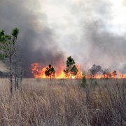Prairie mitigation prescribed burn