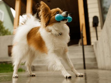 Top Dog Pet Store
