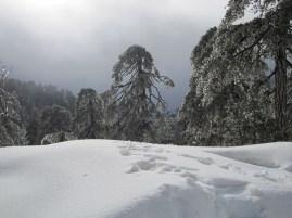 8 Feb 2012 - Troodos mountains, Cyprus (10)