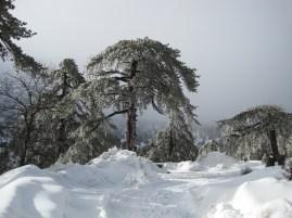 8 Feb 2012 - Troodos mountains, Cyprus (11)