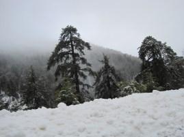 8 Feb 2012 - Troodos mountains, Cyprus (23)