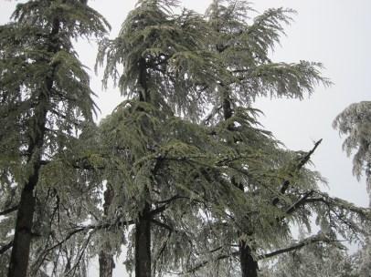 8 Feb 2012 - Troodos mountains, Cyprus (3)