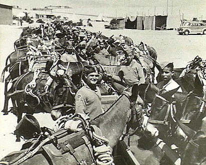 1. Pack Mules Cyprus Regiment Greece WW2
