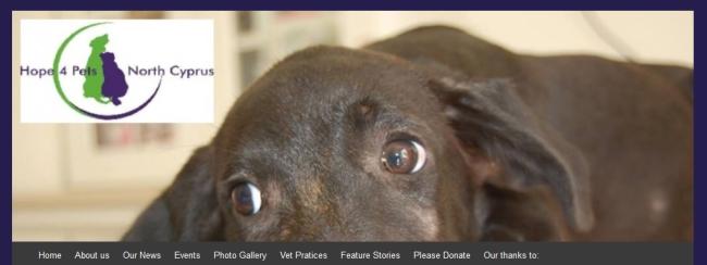 Hope 4 Pets website banner