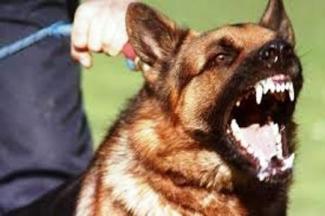Ferocious guard dog