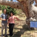 Engin and Hatice next to the ancient tree of Cinarli  image