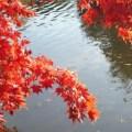 Photos of Sheffield Park Gardens,  East Sussex (4)
