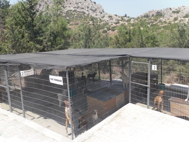 KAR shelter with happy dogs