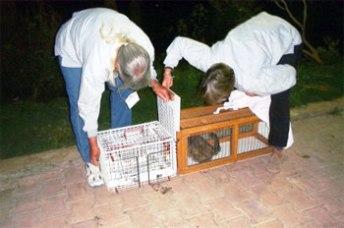 Cat catching