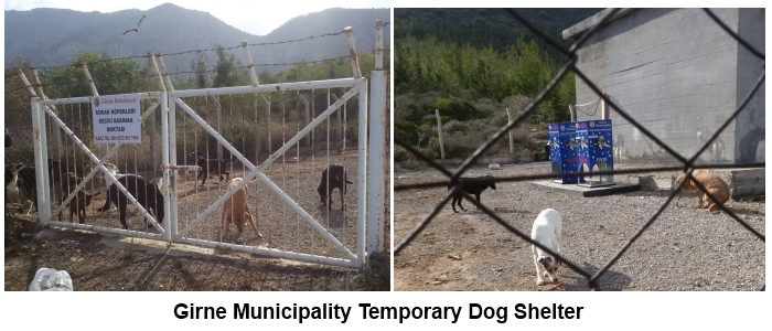 Girne temporary dog shelter kar pictures