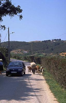 Rural uid 648379
