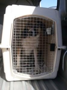 Street Dog Returned