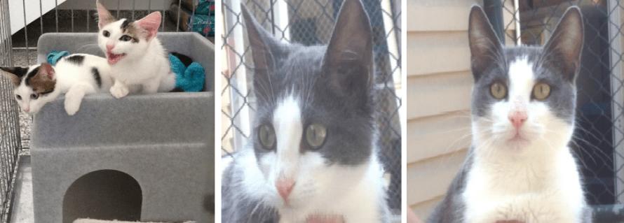 kitten-montage