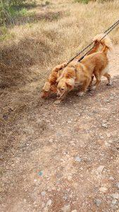 Dog walking 5