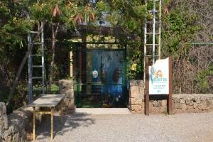 Meritta Turtle Rehabilitation Centre 1B