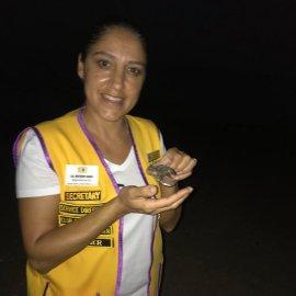 Caretta Sea Turtles 3