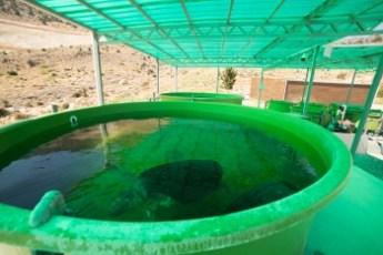 Taşkent Wildlife Rescue and Rehabilitation Centre, 6