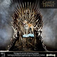 Game of Homes (10)