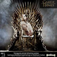 Game of Homes (13)