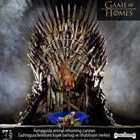 Game of Homes (4)