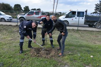 Girne Municipal employees planted seedlings 1 (6)