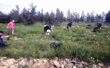 ATA Planting a forest (10)