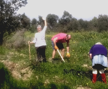 ATA Planting a forest (12)