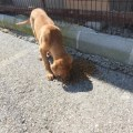Girne Municipality Does Not Neglect Animal (3)