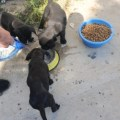 Girne Municipality Does Not Neglect Animal (4)