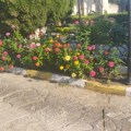 Bellapais Monastery and land cleaned by Girne Municipality (4)