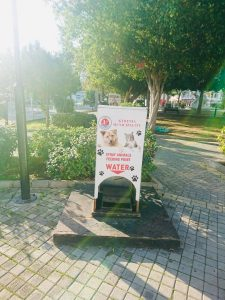 Girne Municipality animal welfare (1)