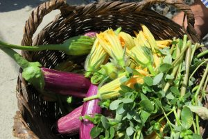 Garden To Plate- Cooking Class & Rural Villages Tour (8hrs) €110pp