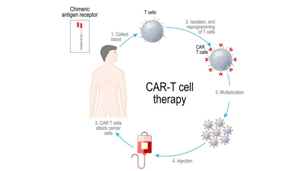 HLA-typed T Cells
