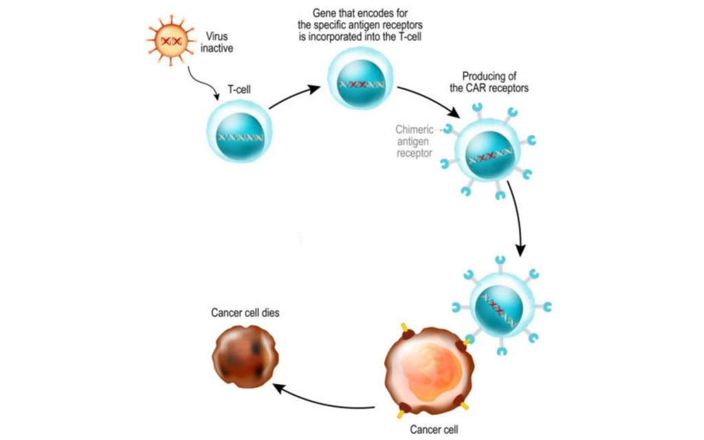 How CAR T-cell therapies are manufactured