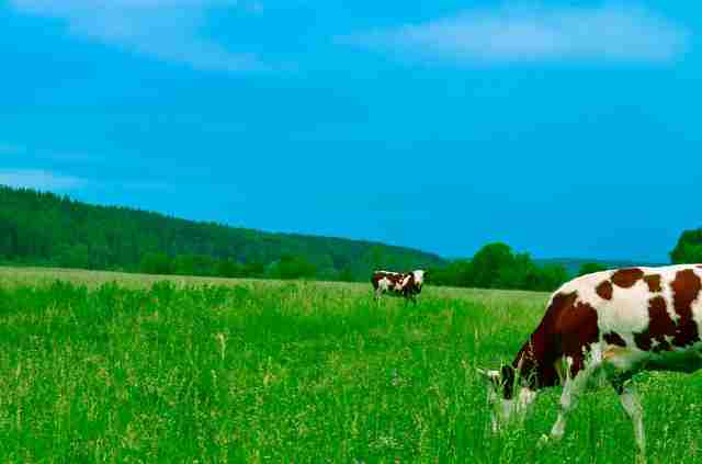 How To Start Dairy Farm Business In 2020