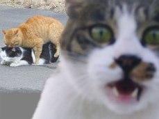 funny-cat-photobombs-58e2329d72542__605