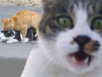 funny-cat-photobombs-58e2329d72542__605