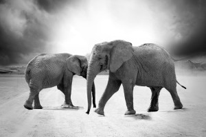 elephant-970456_960_720