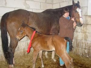 konie (25)