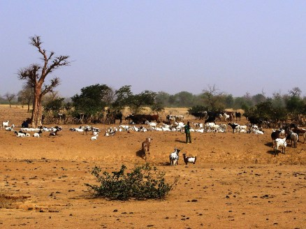 sahel-region-on-our-way-to-mali