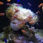 箱根観光|芦ノ湖の箱根園水族館はおすすめの観光スポット。小田原、箱根に行くならぜひ!