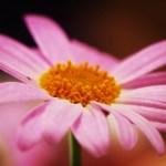 テレコン装着で焦点距離を2倍に、お花にグッと近づいて
