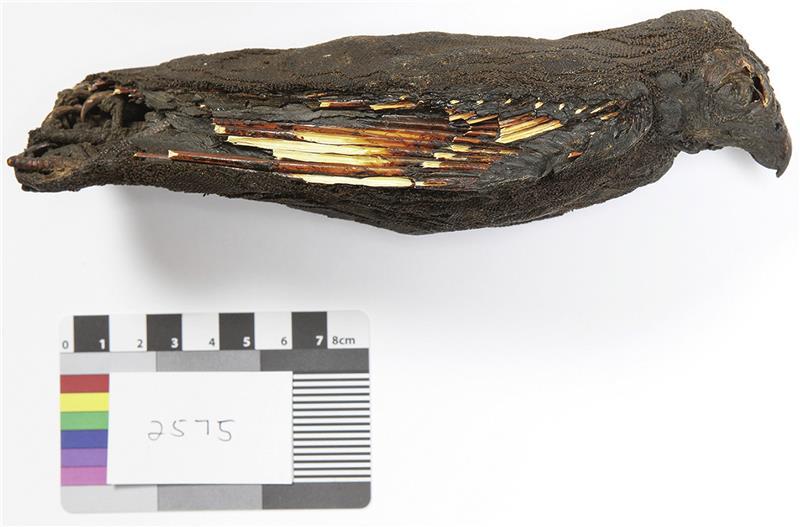 ancient egypt mummified kestrel