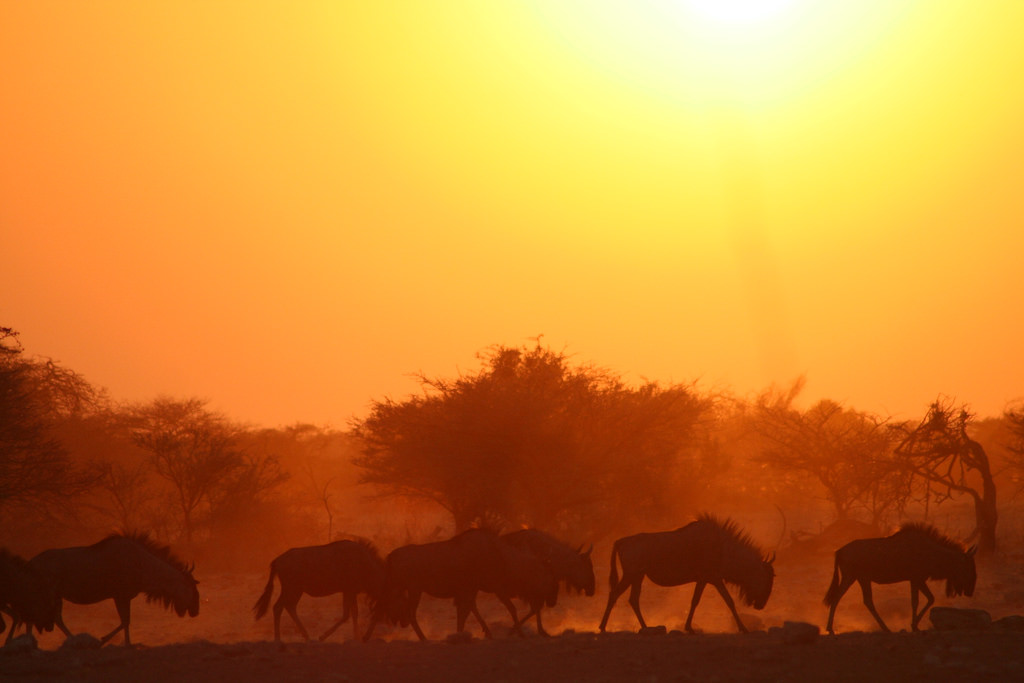 Climate Change Extreme African Heatwaves May Spark